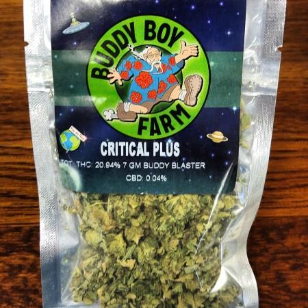 Critical plus Bud Blast cannabis