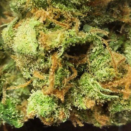 Golden Pineapple marijuana from Phat Panda