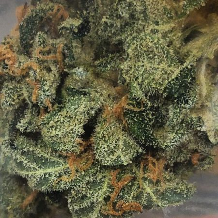 G-13 Agrijuana Bellingham WA marijuana