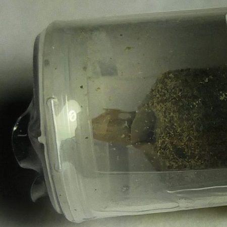 Honey cone close up