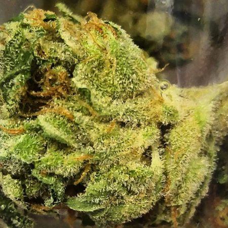 OG Chem Phat Panda marijuana