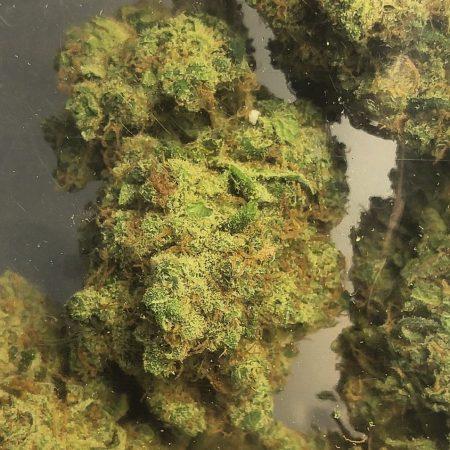 Dutch Treat Badass Grass Cannnabis Marijuana Weed Bellingham WA