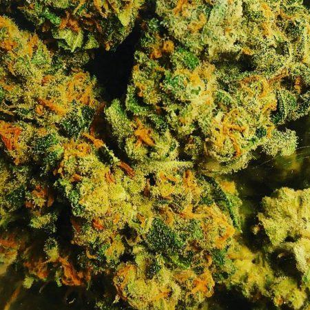 Green Crack GTP Cannnabis Marijuana Weed Bellingham WA