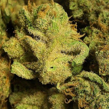Orange Blossom b Cannnabis Marijuana Weed Bellingham WA