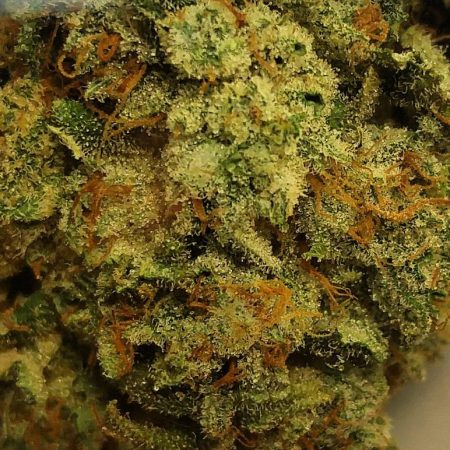 kaplan-kosher-from-clandestine-bellingham-marijuana-cannabis-weed-pot