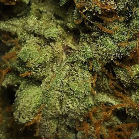rainbow-kush-from-clandestine-bellingham-marijuana-cannabis-weed-pot