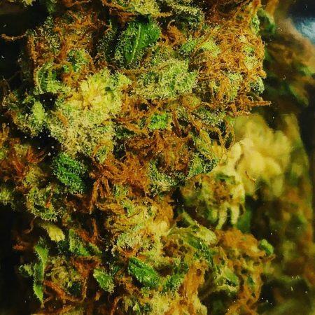 black-cherry-soda-gtp-bellingham-pot-shop-bellingham-weed-cannabis
