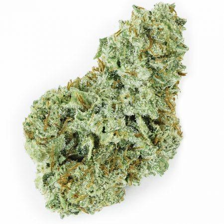 Chocolope Gabriel Cascade Herb Co Bellingham Cannabis, Bellingham pot shop, Bellingham weed