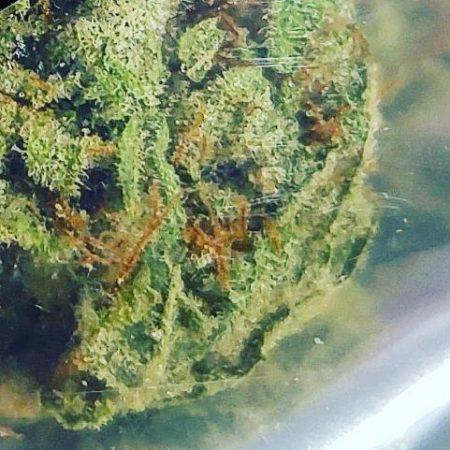 White Widow Pyramid Greenhouses Bellingham marijuana pot shop dispensary