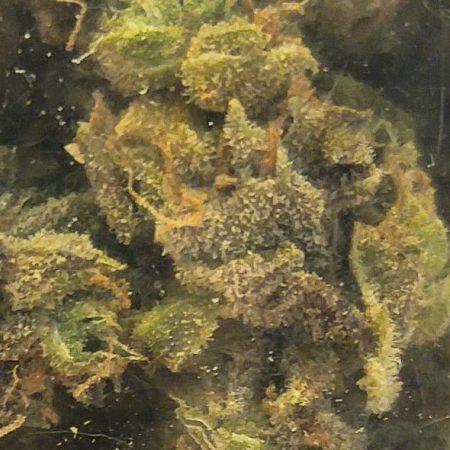 Cannabis King Gardens CKG Purple Python