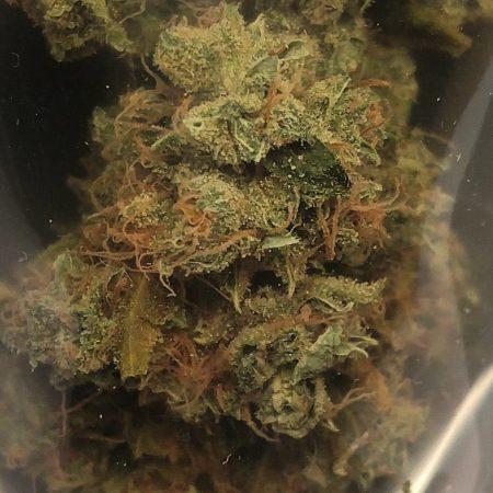 Albert Walker from Cannabis King Gardens