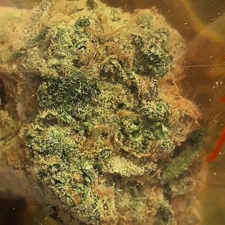 Purps 1 marijuana from Heavyweight Farms