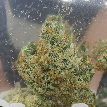 Locktite bud from Clandestine